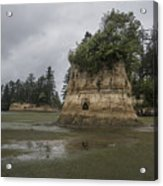 Willapa Bay Shoreline Acrylic Print