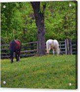 Williamsburg Farm Acrylic Print