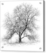 Willow And Blizzard Acrylic Print by Altus Photo Design