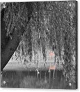 Willow Deer II Acrylic Print