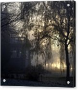 Willow In Fog Acrylic Print