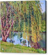 Willow Acrylic Print