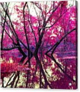 Willow Pink Acrylic Print