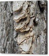 Willow Tree Bark Up Close Acrylic Print