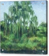 Willow Tree Acrylic Print