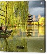 Willow Tree In Liiang China II Acrylic Print