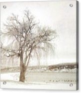 Willow Tree In Winter Acrylic Print