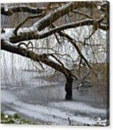Willow Tree On The Frozen Lake Detail Acrylic Print