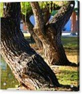 Willow Trees Acrylic Print
