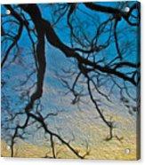 Willowbrush Acrylic Print