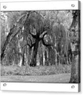 Willows Acrylic Print
