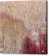 Willows In Winter Acrylic Print