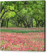 Willows,indian Paintbrush Make For A Colorful Palette. Acrylic Print