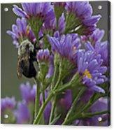 Willowwood Bee Acrylic Print