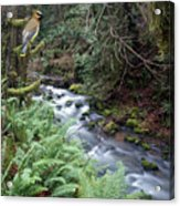 Wilson Creek #14 With Added Cedar Waxwing Acrylic Print