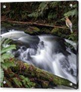 Wilson Creek #18 With Added Cedar Waxwing Acrylic Print