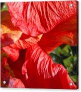 Wilting Hibiscus Two Acrylic Print