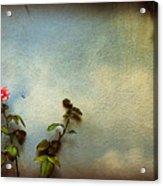 Wilting Rose Acrylic Print