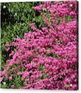 Fuji Velvia 50 Acrylic Print