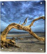 Wind Bent Driftwood Acrylic Print