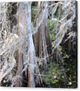 Wind Through The Cypress Trees Acrylic Print
