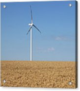 Wind Turbines On Wheat Field Summer Season Acrylic Print