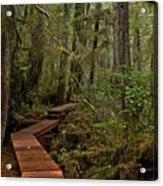 Winding Through The Willowbrae Rainforest Acrylic Print