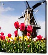 Windmill Island Tulip Gardens Acrylic Print