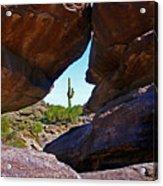 Window Cactus Acrylic Print