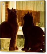 Window Cats Acrylic Print