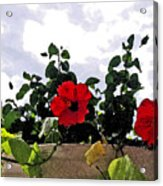 Window Flowers Acrylic Print