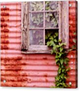 Window Of Ivy Acrylic Print
