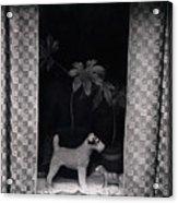 Window Scene Acrylic Print
