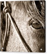 Window To The Soul Acrylic Print