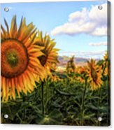 Window To The Sunflower Fields Oil Painting Acrylic Print