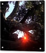 Window Tree Acrylic Print