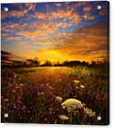 Windsong Acrylic Print by Phil Koch