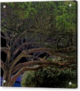 Windswept Dreams Acrylic Print
