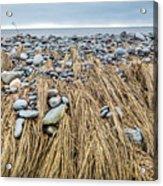 Windswept Grass At Lawrencetown Beach, Nova Scotia Acrylic Print