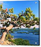 Windswept Pine On Rattlesnake Mountain Acrylic Print