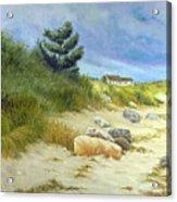Windswept Sands Acrylic Print