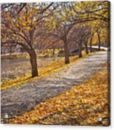Windswept Walk Acrylic Print by Susan Cole Kelly