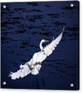 Windy Flight Acrylic Print