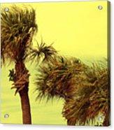 Windy Palms Acrylic Print
