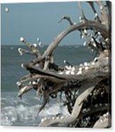 Windy Sea Acrylic Print