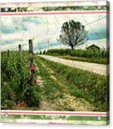 Wine And Roses. Brandini Winery Acrylic Print
