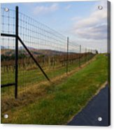 Wine Fields Acrylic Print