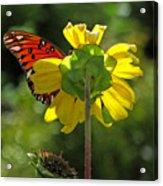 Wing Flower Acrylic Print
