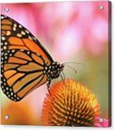 Winged Beauty Acrylic Print