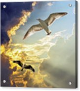 Wings Against The Storm Acrylic Print